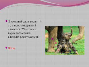 Взрослый слон весит 4 т , а новорожденный слоненок 2% от веса взрослого слона