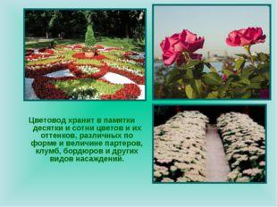Цветовод хранит в памятки десятки и сотни цветов и их оттенков, различных по