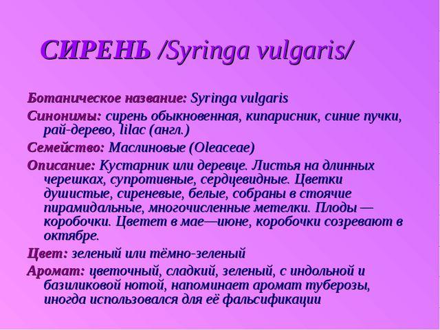 СИРЕНЬ /Syringa vulgaris/ Ботаническое название: Syringa vulgaris Синонимы:...
