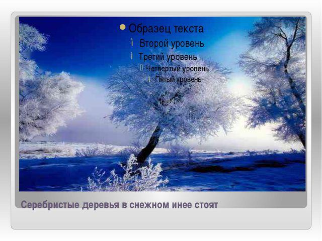Серебристые деревья в снежном инее стоят