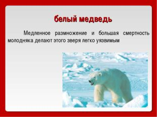 белый медведь Медленное размножение и большая смертность молодняка делают эт