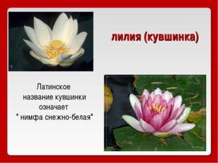 "Латинское название кувшинки означает "" нимфа снежно-белая"" лилия (кувшинка)"