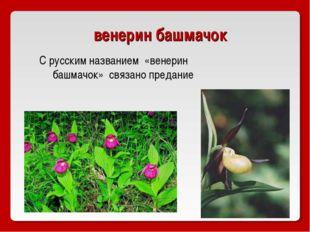 венерин башмачок С русским названием «венерин башмачок» связано предание