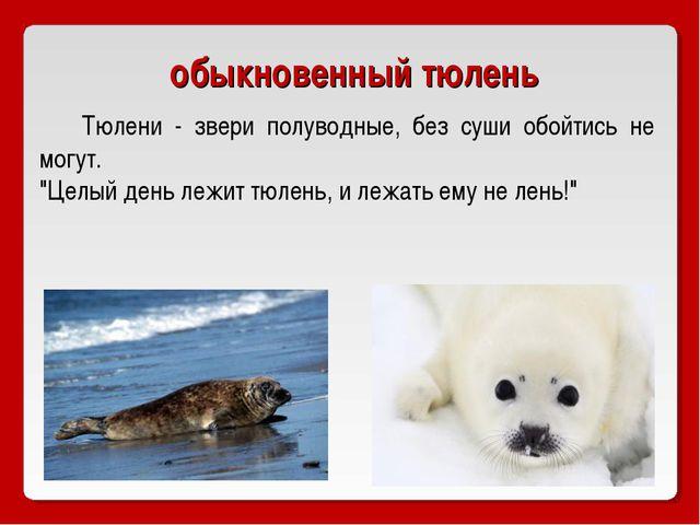 """обыкновенный тюлень Тюлени - звери полуводные, без суши обойтись не могут. """"Ц..."""