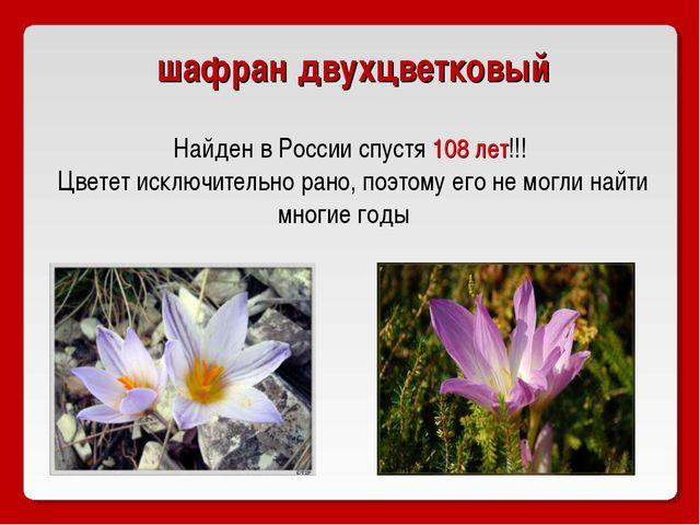 шафран двухцветковый Найден в России спустя 108 лет!!! Цветет исключительно...