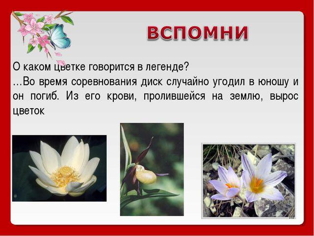 О каком цветке говорится в легенде? …Во время соревнования диск случайно угод...