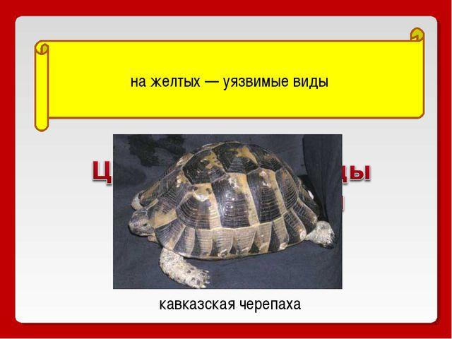 на желтых — уязвимые виды кавказская черепаха