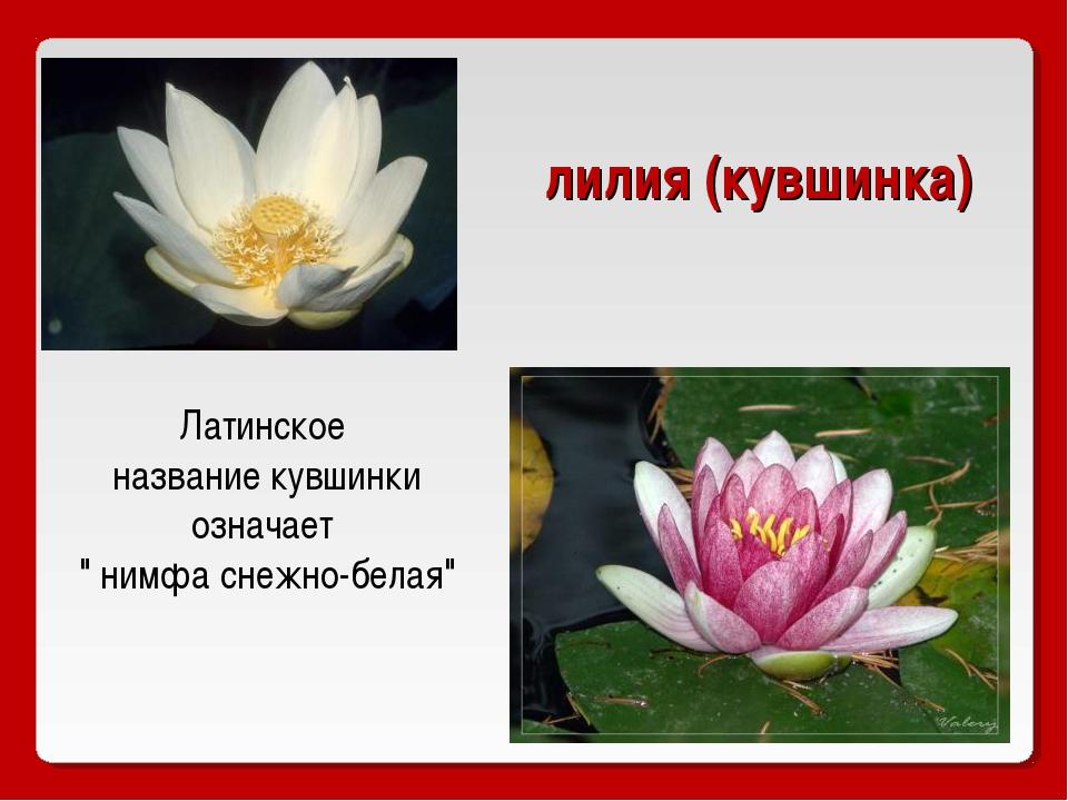 всегда страница красной книги россии с кувшинкой белой девушки