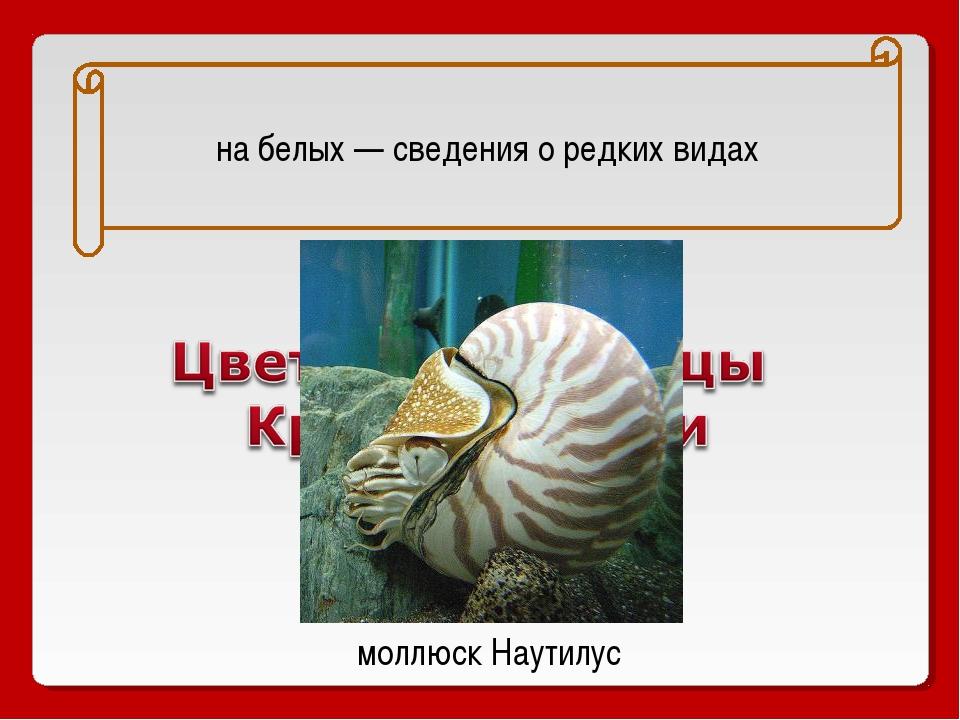 на белых — сведения о редких видах моллюск Наутилус
