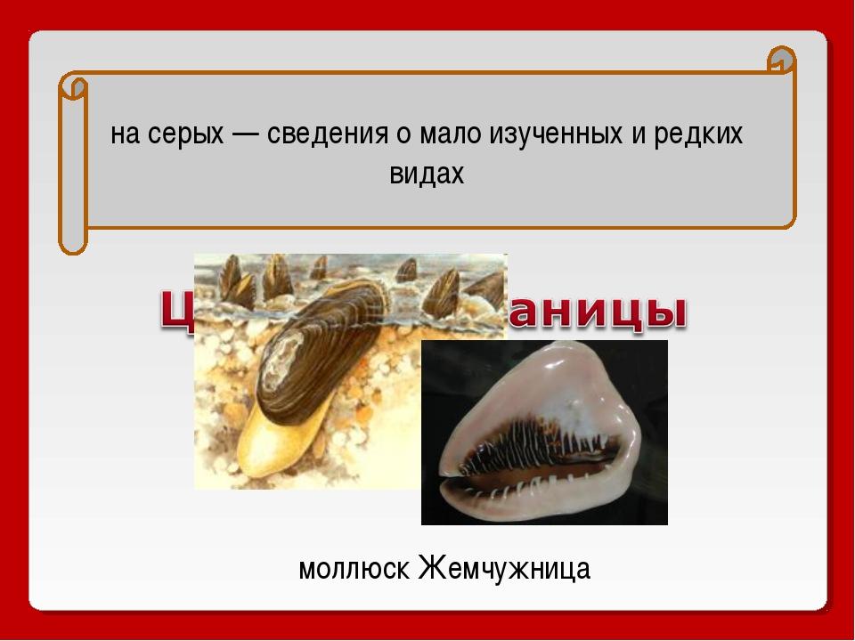 на серых — сведения о мало изученных и редких видах моллюск Жемчужница
