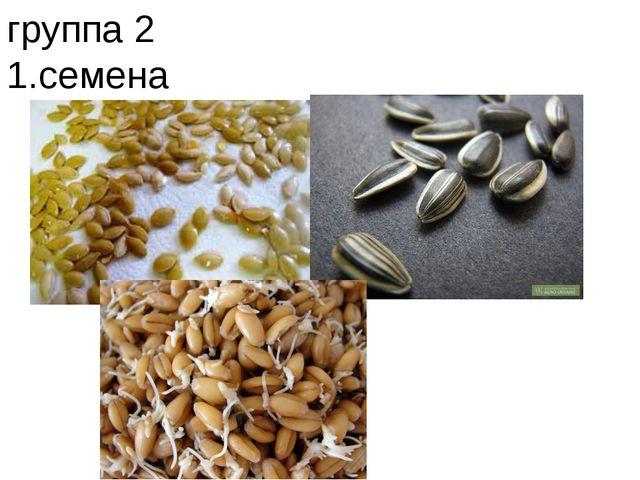 группа 2 1.семена