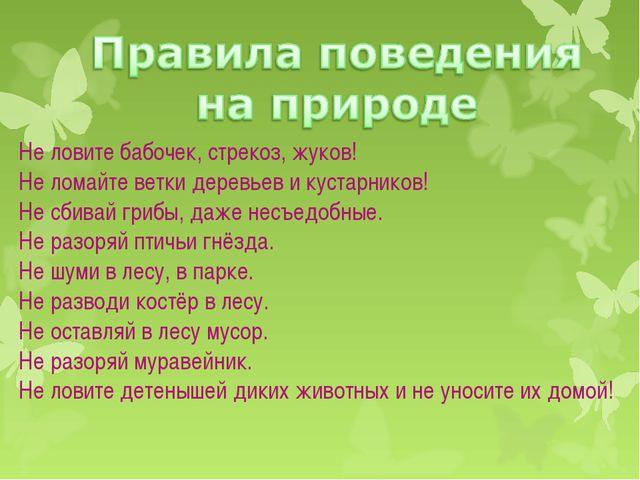 Не ловите бабочек, стрекоз, жуков! Не ломайте ветки деревьев и кустарников!...