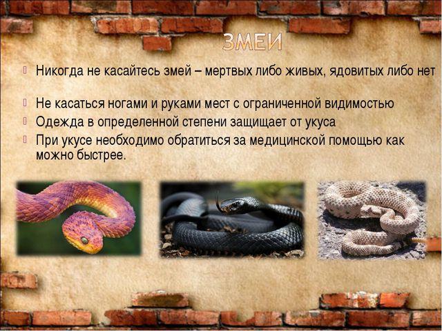 Никогда не касайтесь змей – мертвых либо живых, ядовитых либо нет Не касаться...