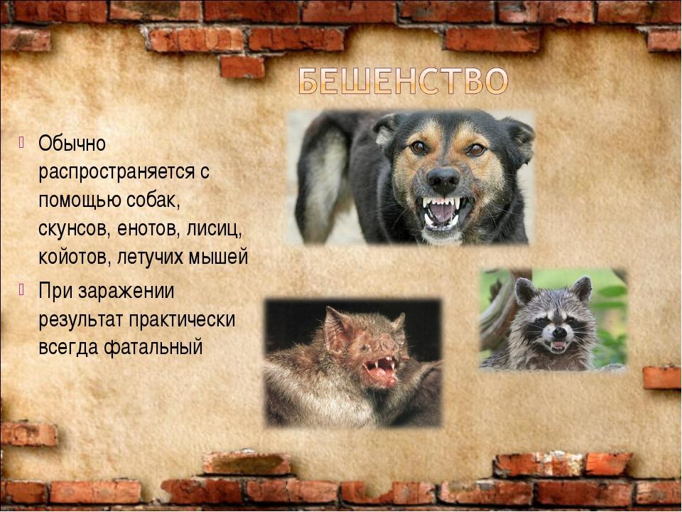 Обычно распространяется с помощью собак, скунсов, енотов, лисиц, койотов, лет...