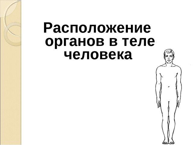 Расположение органов в теле человека