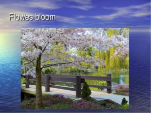 Flowes bloom