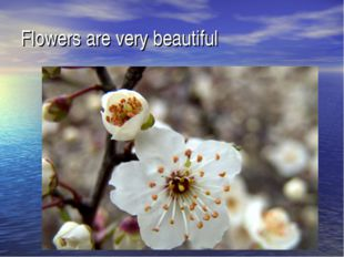 Flowers are very beautiful