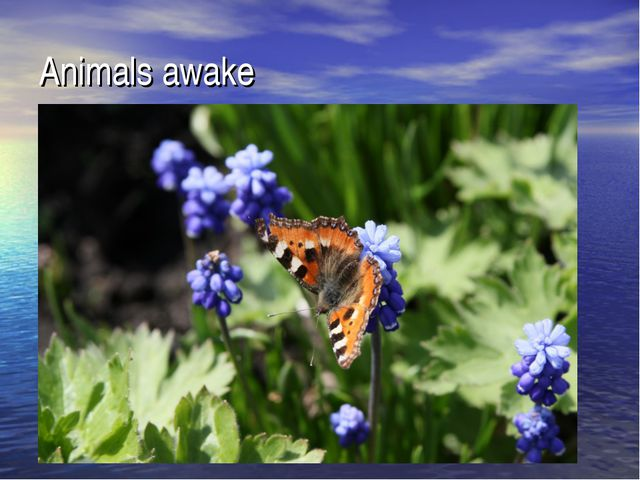 Animals awake