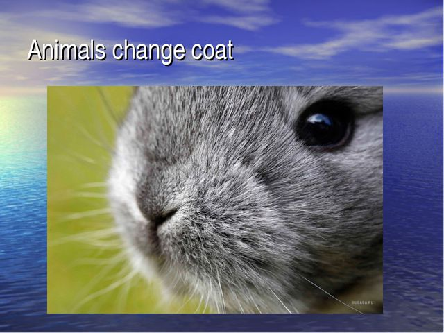 Animals change coat