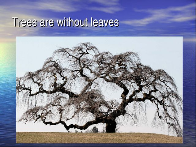 Trees are without leaves