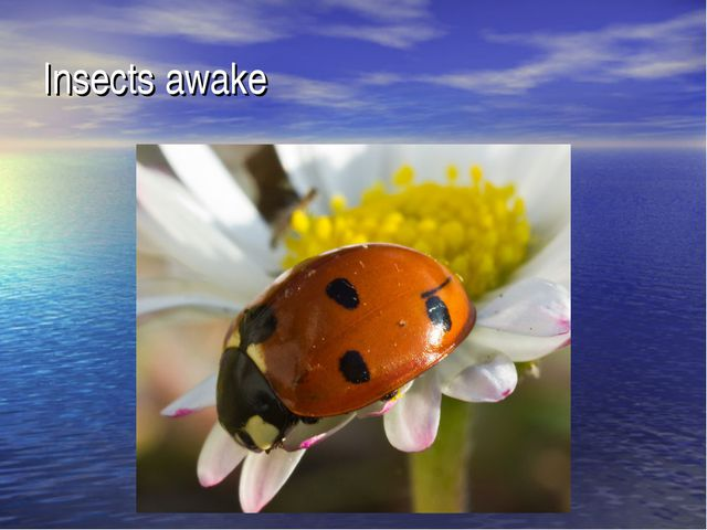 Insects awake