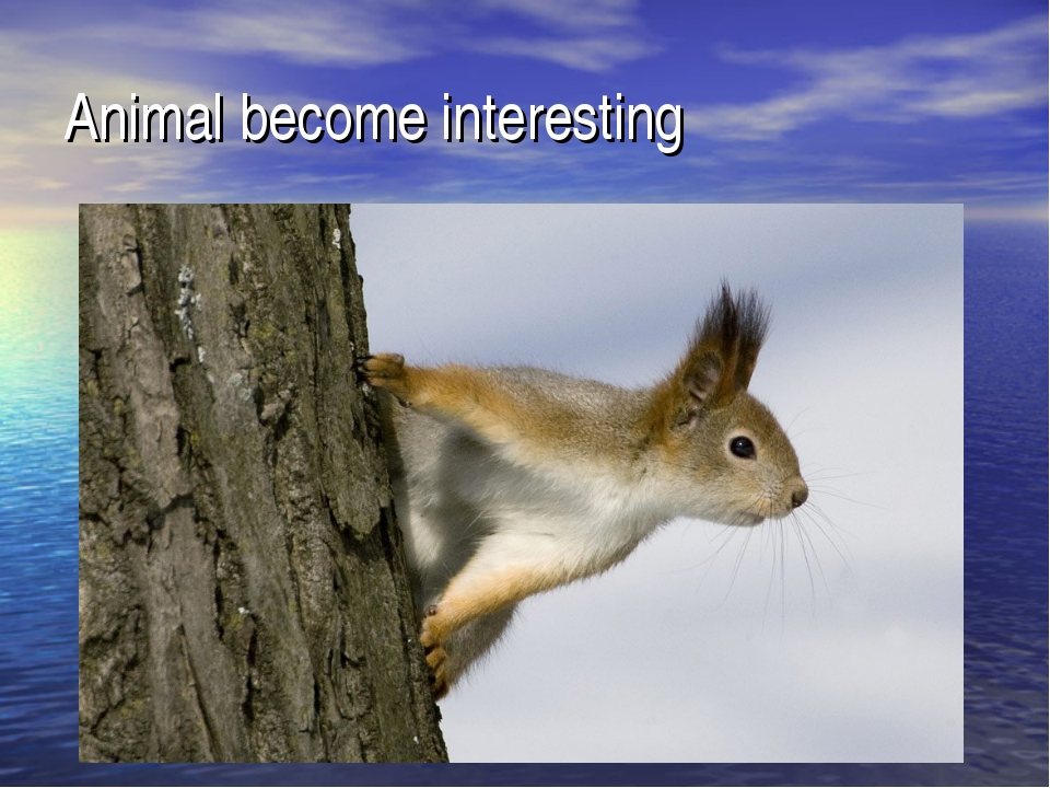 Animal become interesting