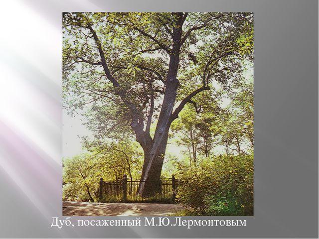 Дуб, посаженный М.Ю.Лермонтовым