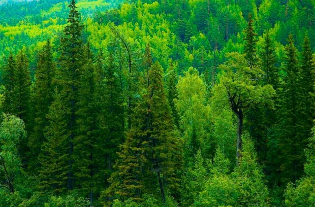http://rk.karelia.ru/wp-content/uploads/2014/10/Wood-620x408.jpg