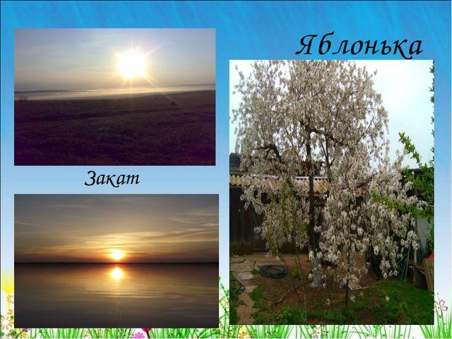 Яблонька Закат