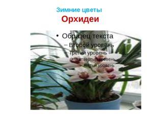 Зимние цветы Орхидеи