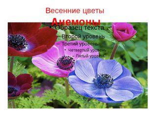 Весенние цветы Анемоны