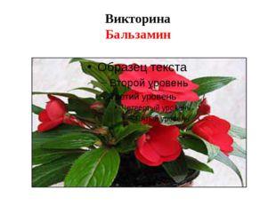Викторина Бальзамин