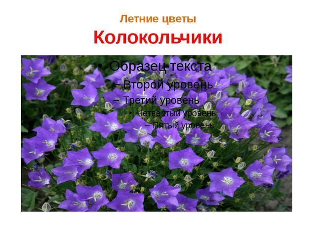 Летние цветы Колокольчики