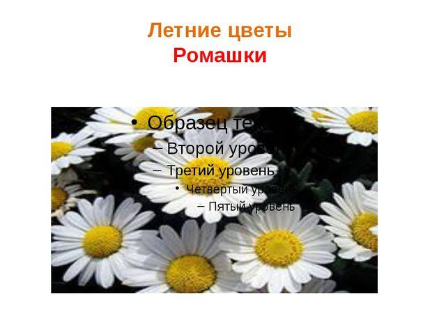 Летние цветы Ромашки