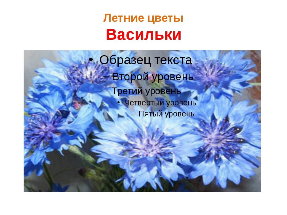 Летние цветы Васильки