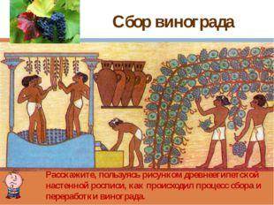 Сбор винограда Расскажите, пользуясь рисунком древнеегипетской настенной росп