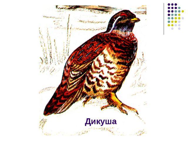 Дикуша