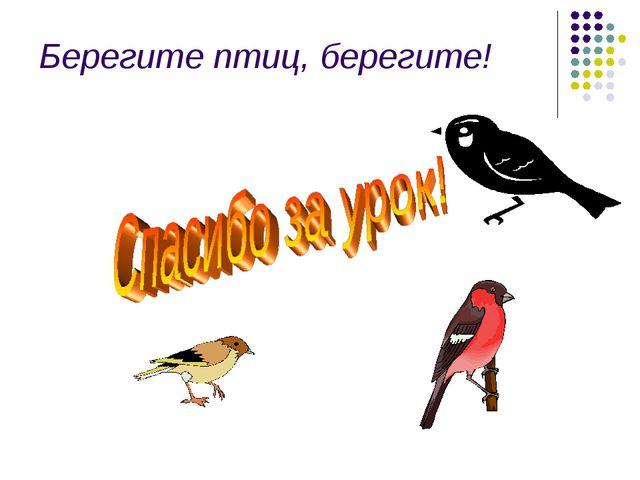 Берегите птиц, берегите!