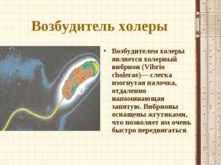 Возбудитель холеры Возбудителем холеры является холерный вибрион (Vibrio chol