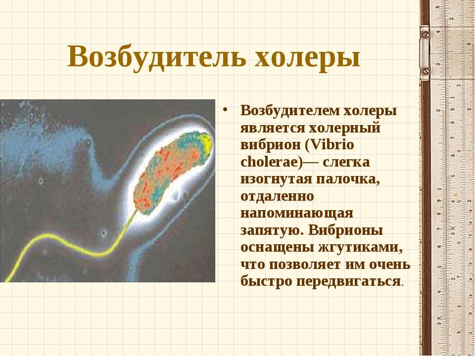 Возбудитель холеры Возбудителем холеры является холерный вибрион (Vibrio chol...