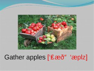 Gather apples ['ɡæðə 'æplz]