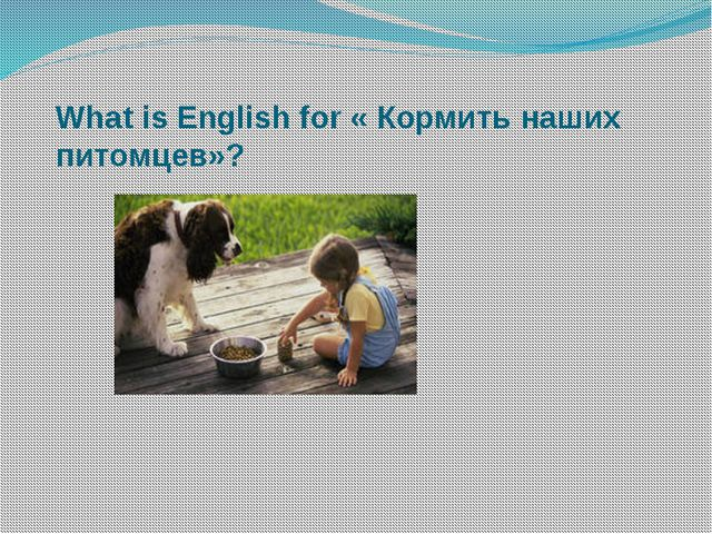What is English for « Кормить наших питомцев»?