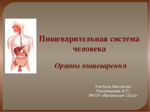 Пищеварительная система человека Органы пищеварения Учитель биологии Пономаре