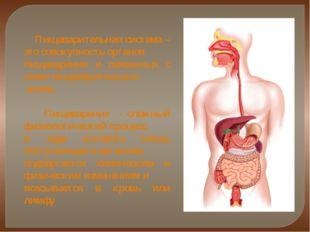 Пищеварительная система – это совокупность органов пищеварения и связанных с