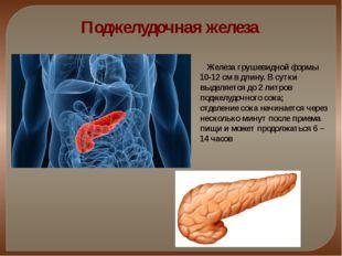 Поджелудочная железа Железа грушевидной формы 10-12 см в длину. В сутки выдел