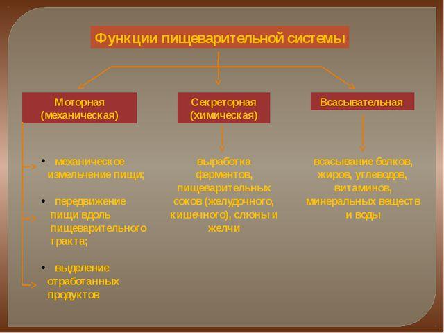Функции пищеварительной системы Моторная (механическая) Секреторная (химическ...