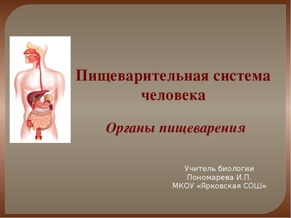 Пищеварительная система человека Органы пищеварения Учитель биологии Пономаре...