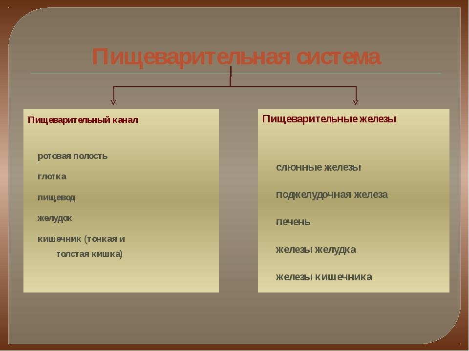 Пищеварительная система Пищеварительный канал ротовая полость глотка пищевод...