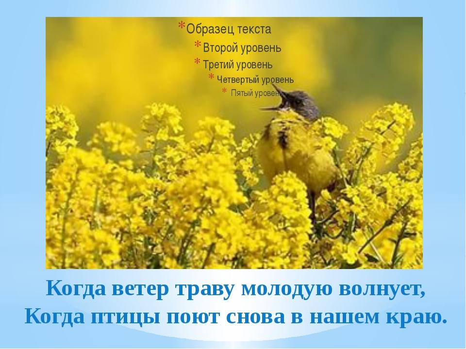 Когда ветер траву молодую волнует, Когда птицы поют снова в нашем краю.