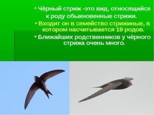 Чёрный стриж -это вид, относящийся к роду обыкновенные стрижи. Входит он в се